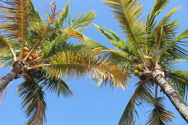 palma s kokosy